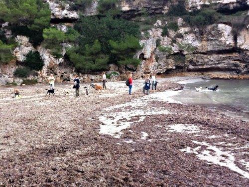 Hunde wandern auf Mallorca macht Spaß.