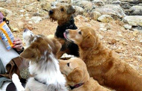 Hunde wandern auf Mallorca