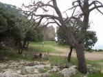 castell-de-alaro-5.jpg